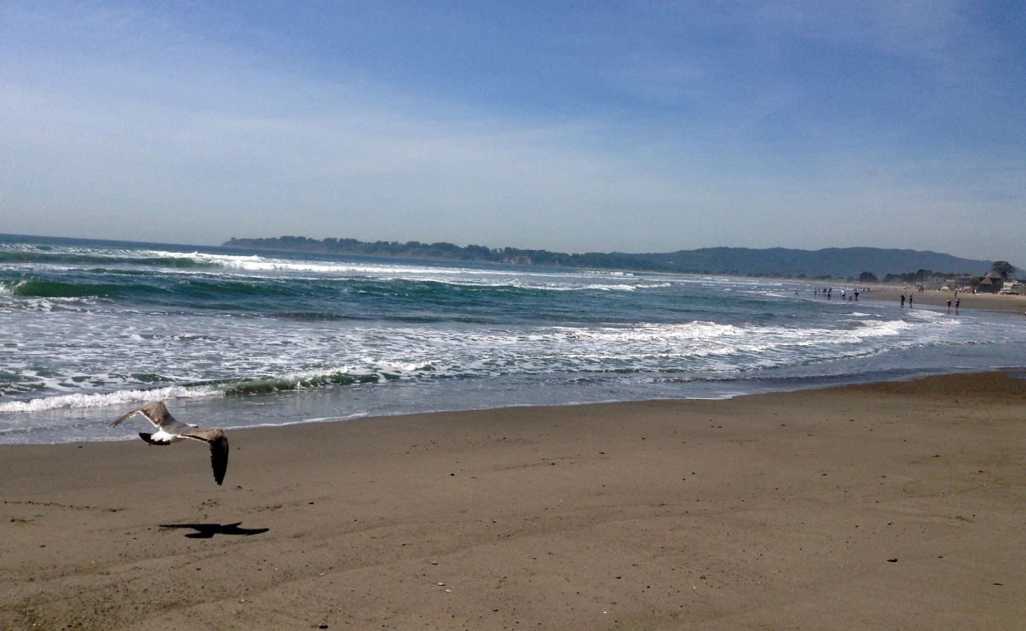 cropped-beachseagull-1.jpg