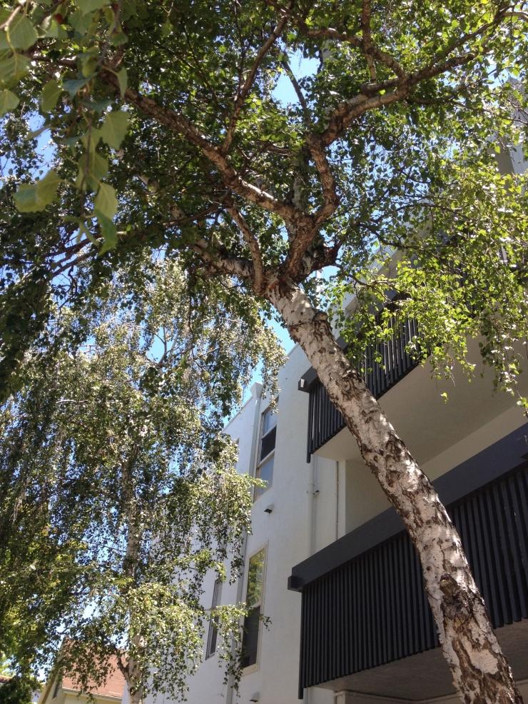Birch on 8th Avenue