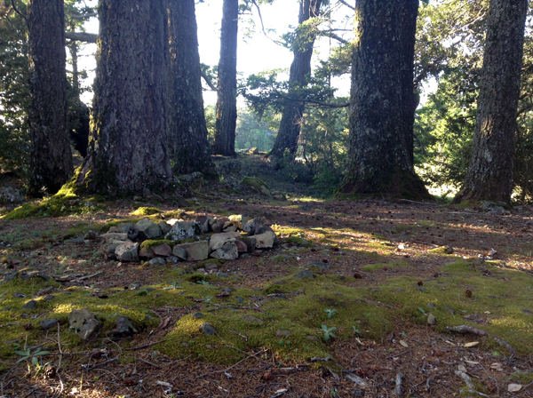 Circle of stones on mossy ground in a grove of Douglas firs.