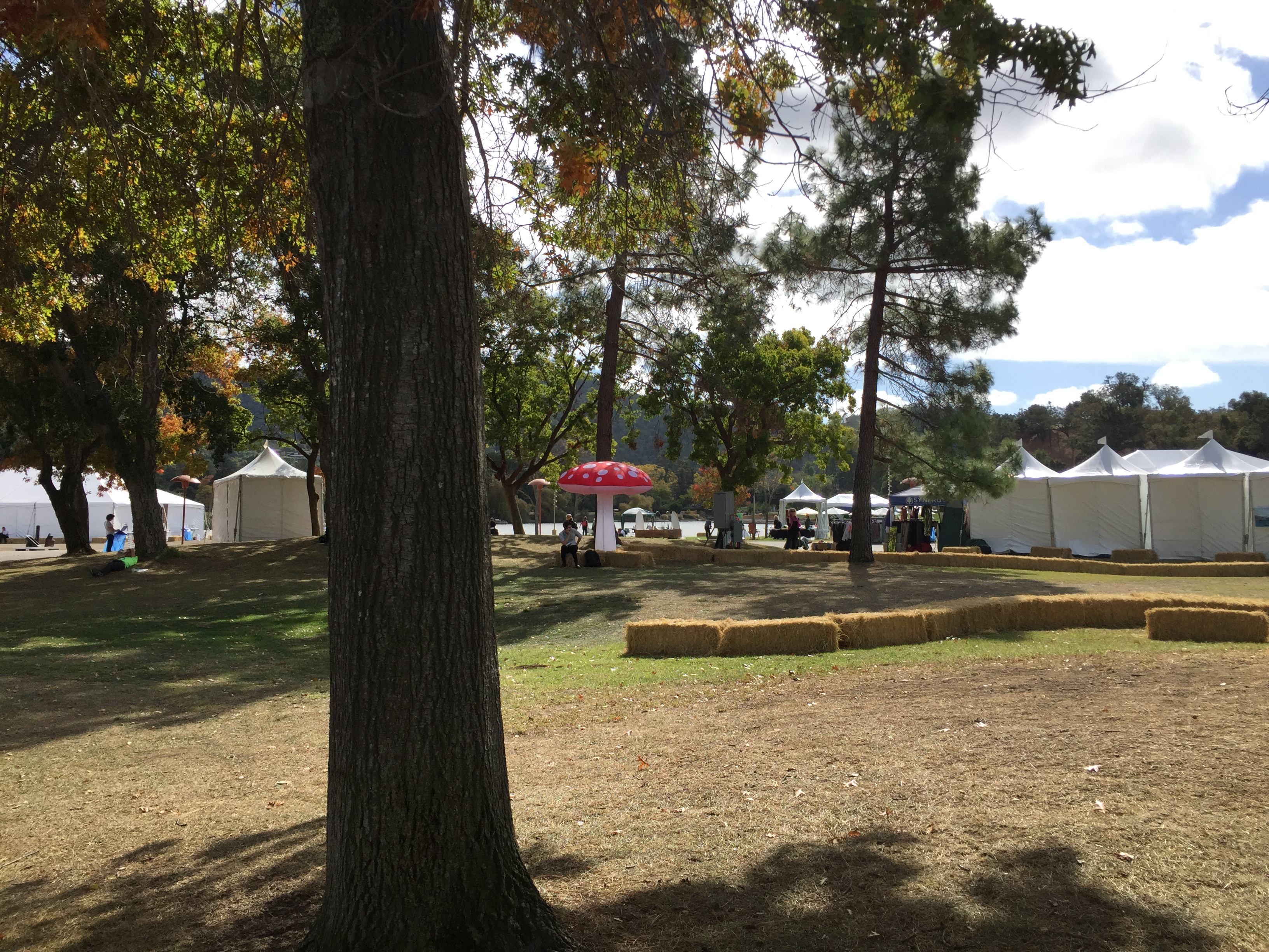 The tents and hay bales of Bioneers, with a large inflatable amanita mushroom in the middle.