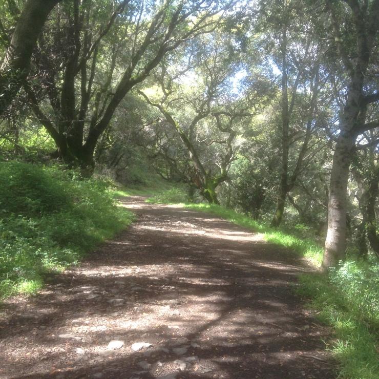 A broad flat trail through a spring landscape